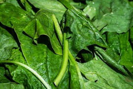 Vegetal material: Spinach - Pesticides multiresidues